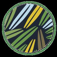 verdeo